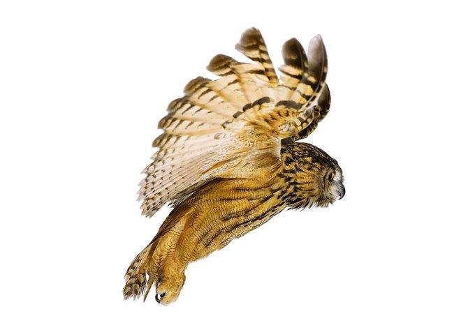 andrew-zuckerman-birds-74.jpg