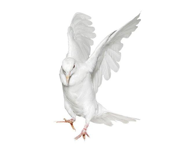 andrew-zuckerman-birds-76.jpg