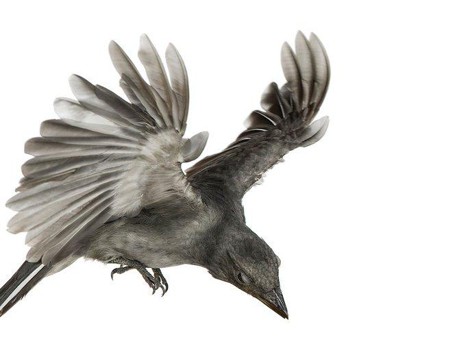 andrew-zuckerman-birds-79.jpg