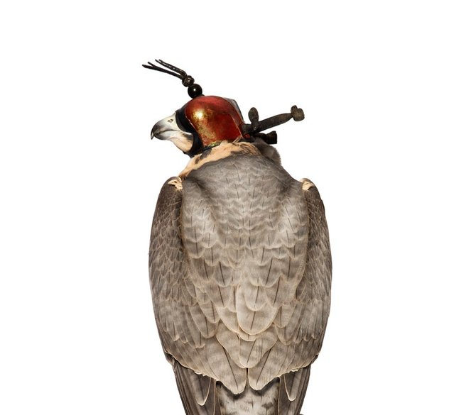 andrew-zuckerman-birds-83.jpg