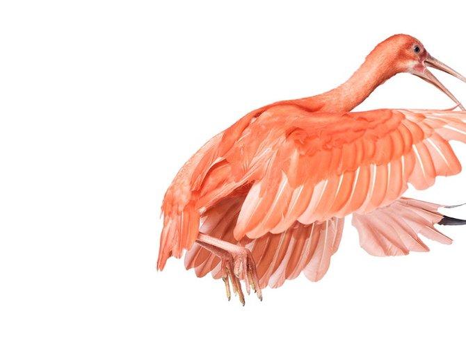 andrew-zuckerman-birds-85.jpg