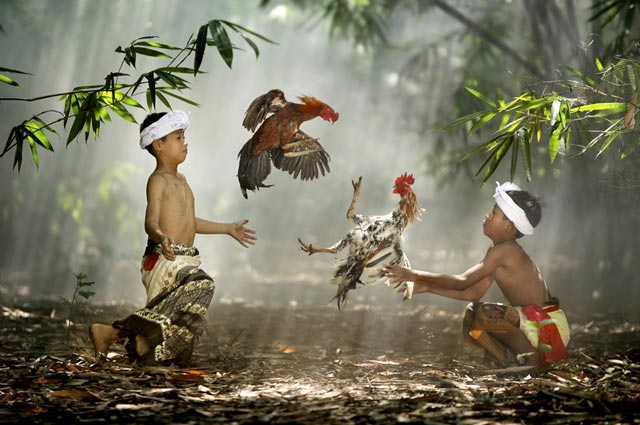 Suradita Village, West Java, Indonesia. Children playing with their roosters. Actually it was not a real cockfight because the roosters didn't wear blades on their feet. Children like to play this game because they almost never have toys in their life. (Photo and caption by Ario Wibisono)