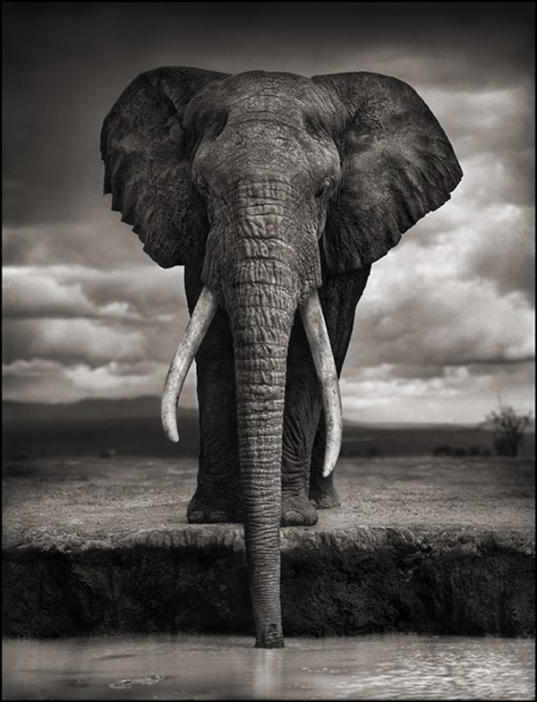 Wildlife photography by nick brandt photography office
