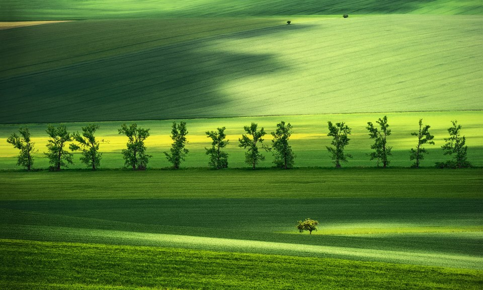 The Green Meeting... -  Pawel Kucharski.jpg