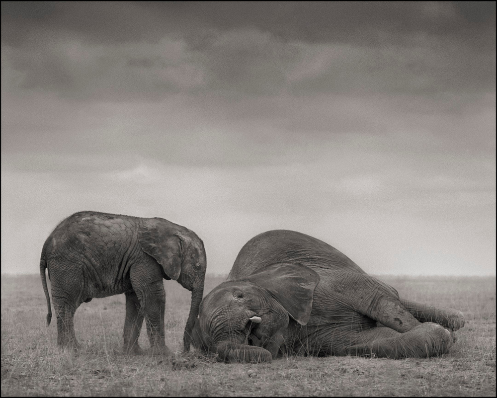 The Two Elephants, Amboseli, 2012