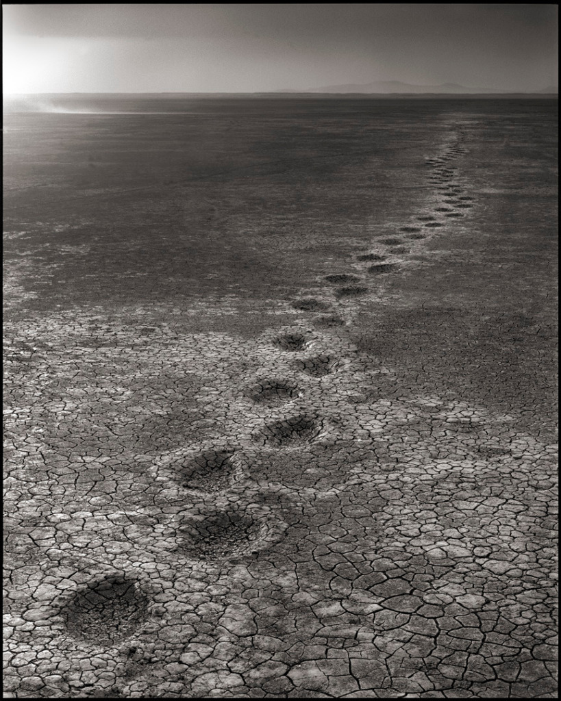 Elephant Footprints, Amboseli, 2012