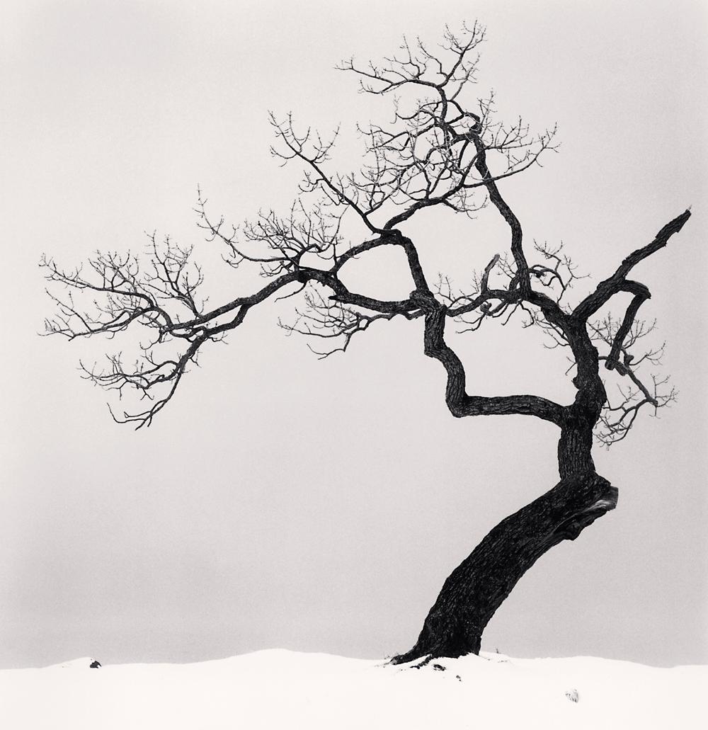 Michael Kenna -Kussharo Lake Tree, Study 1, Kotan, Hokkaido, Japan, 2002