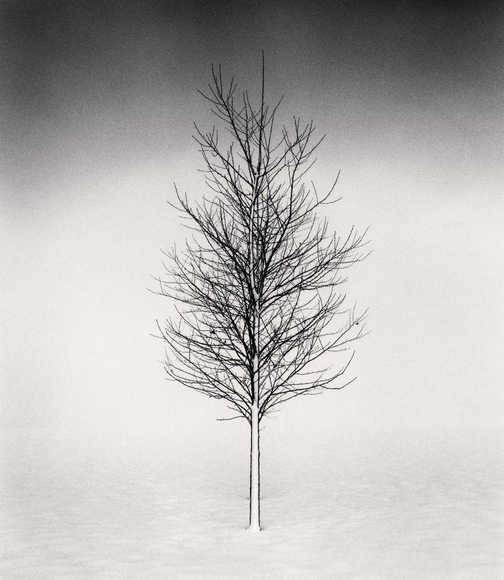 Michael Kenna - Tree Portrait, Study I, Wakoto, Hokkaido, Japan, 2002