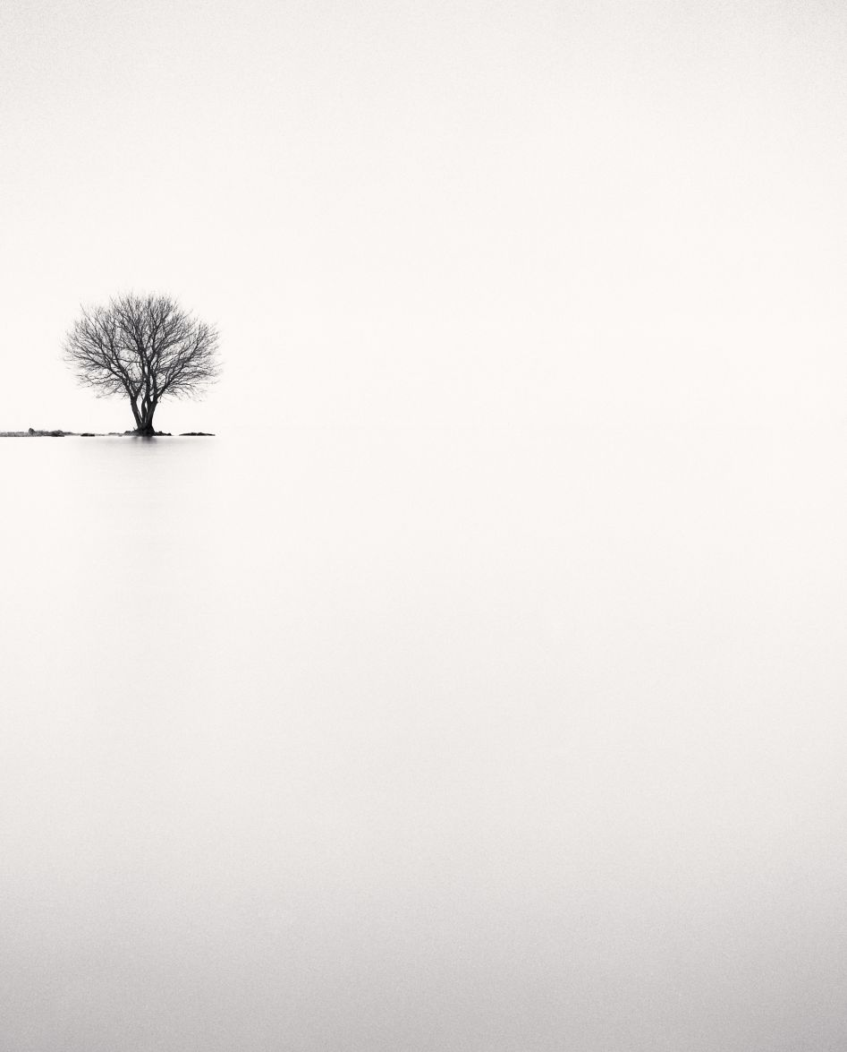 Michael Kenna - Biwa Lake Tree, Study 2, Omi, Honshu, Japan, 2002