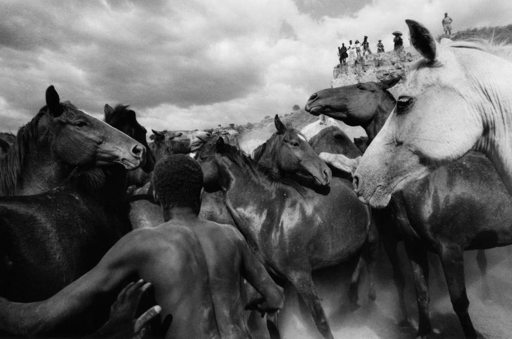 Wild horses in Kenya – Professor Ulrich Mack, 1964