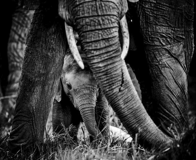 Baby elephant, Kenya 2013