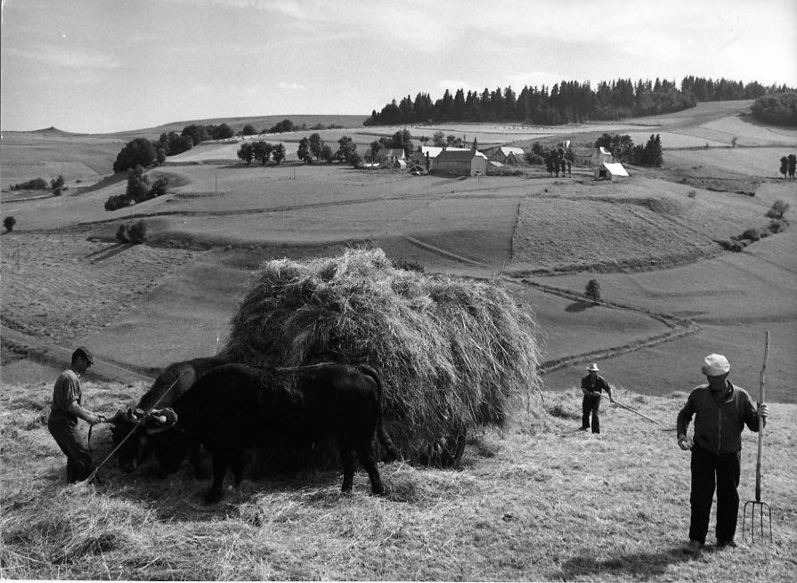 Char à foin à Vin-Haut route D39, Août 1972.© Robert Doisneau