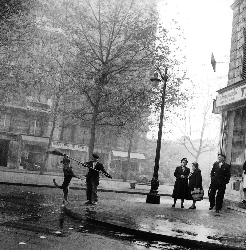 The Tobacconist's Dog, 14th arrondissement, 1953. © Robert Doisneau