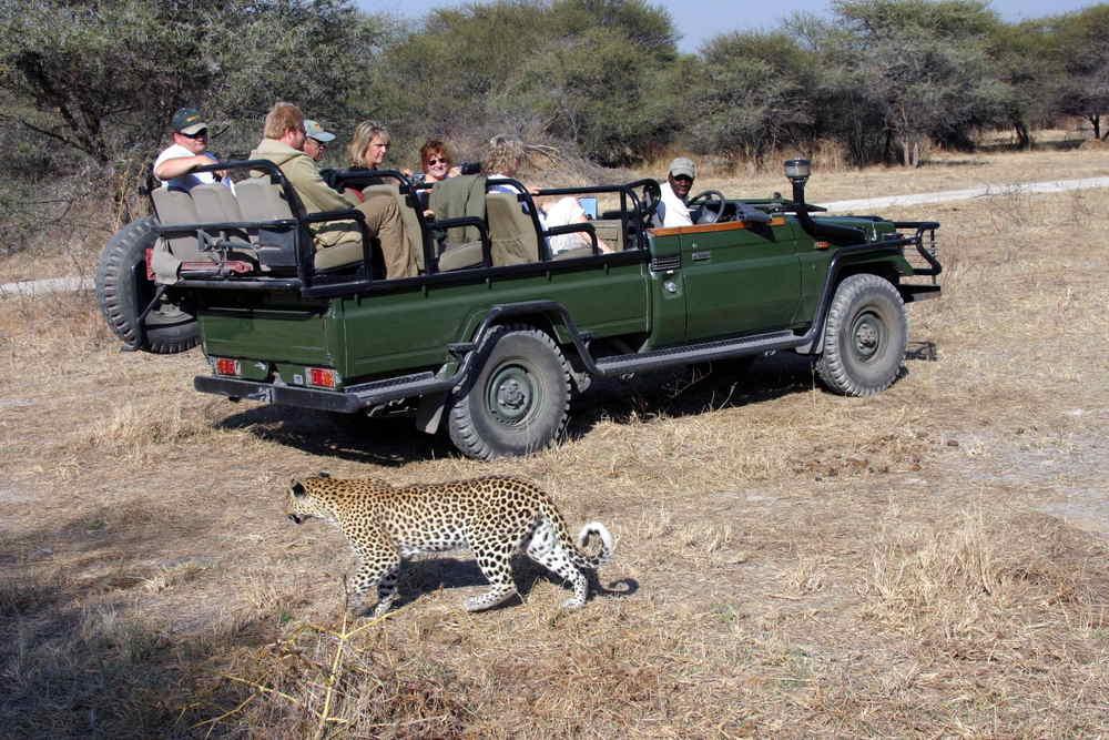 60-Leopard_1431.jpg