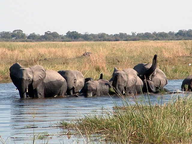75-Elephant-108.jpg