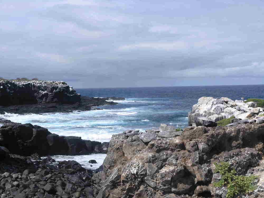 punta suarez, espanol island 8.7.08 198_4.jpg