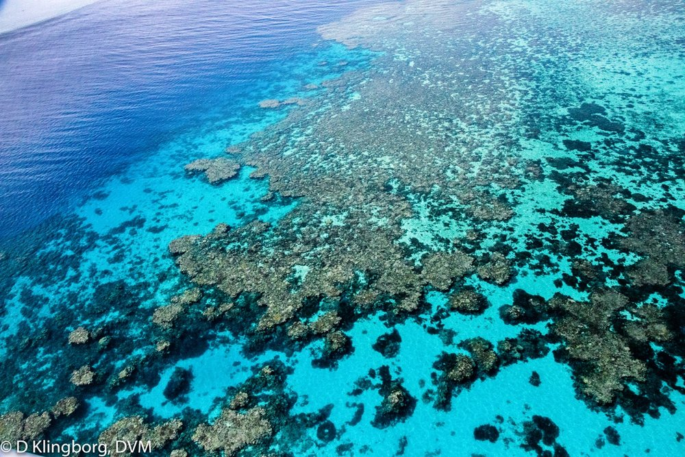 The Great Barrier Reef as seen from a helicopter