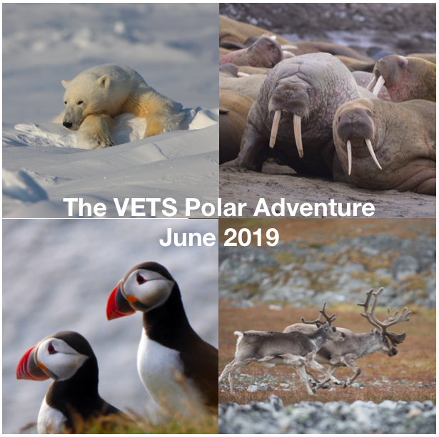 Polar Adventure Picture.png