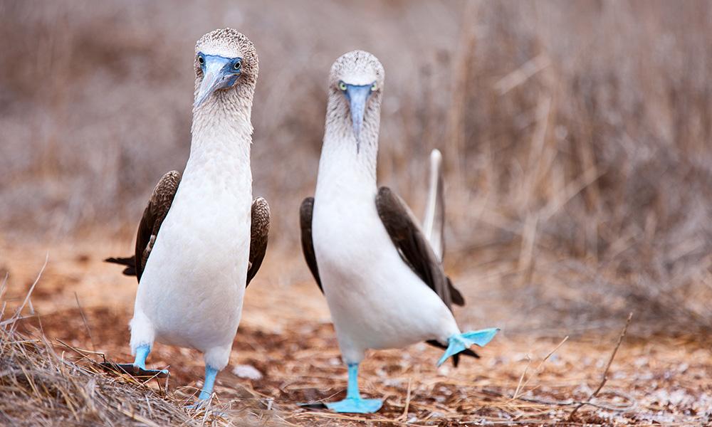 Galapagos/Peru 2021