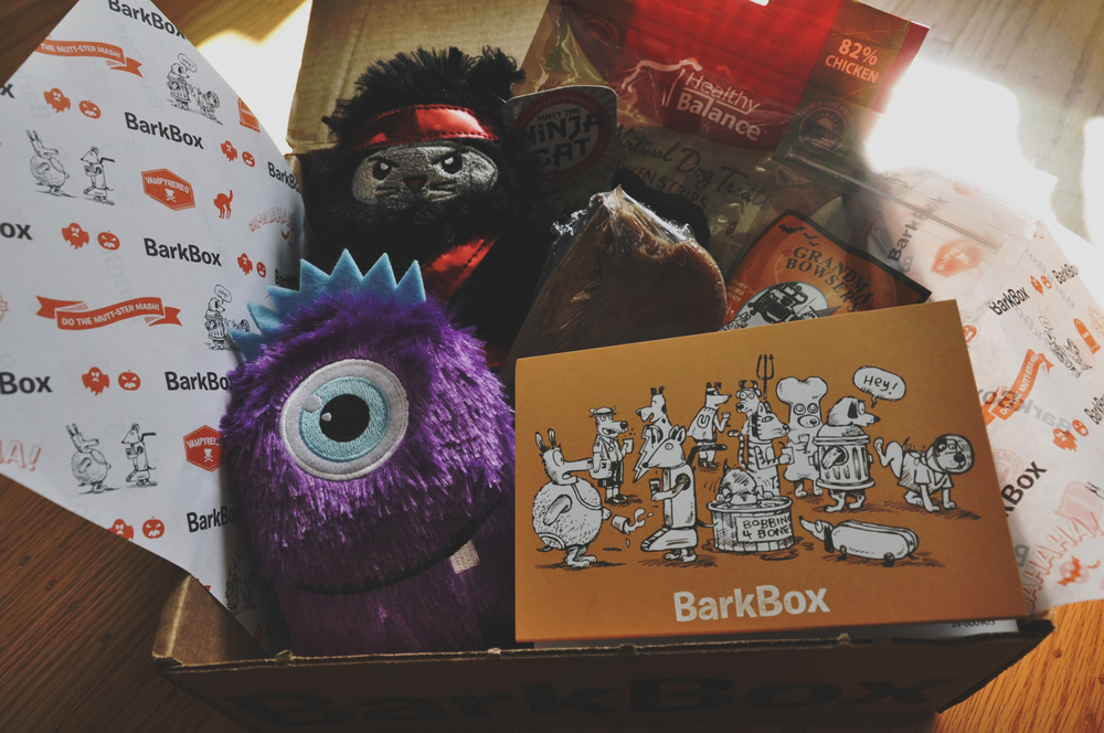 Treasure's October Halloween BarkBox edition |Photo: Melinda Wang
