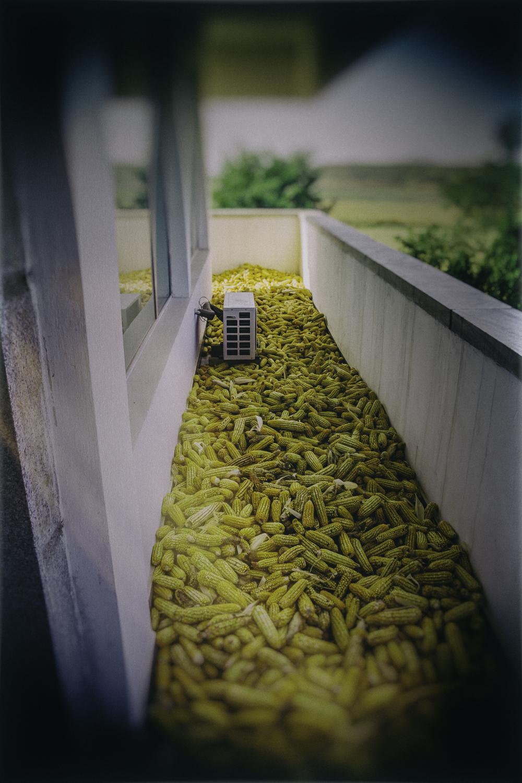Rest Stop Corn