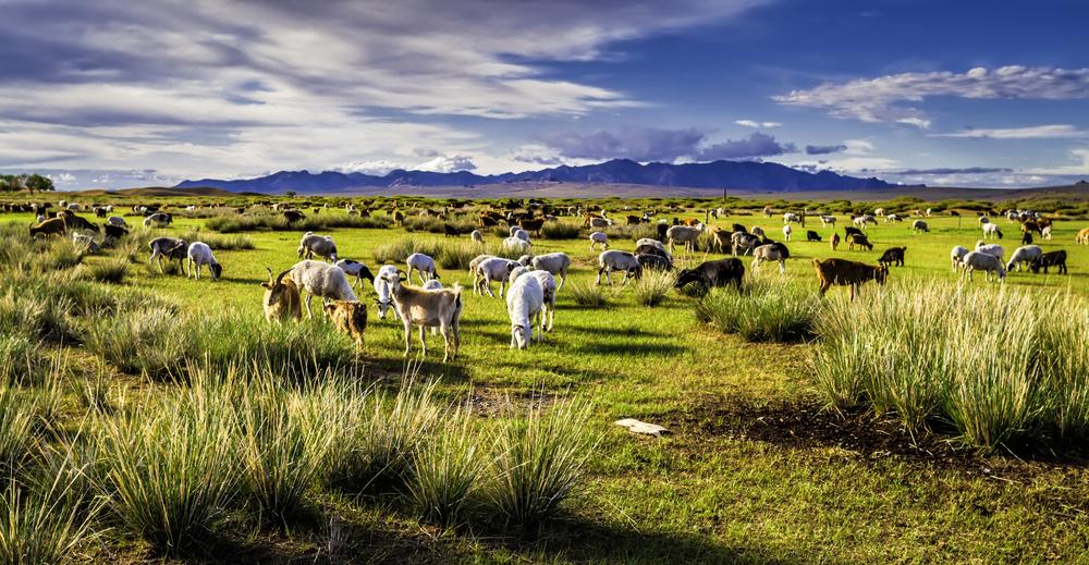 Nomadic Pastoralism