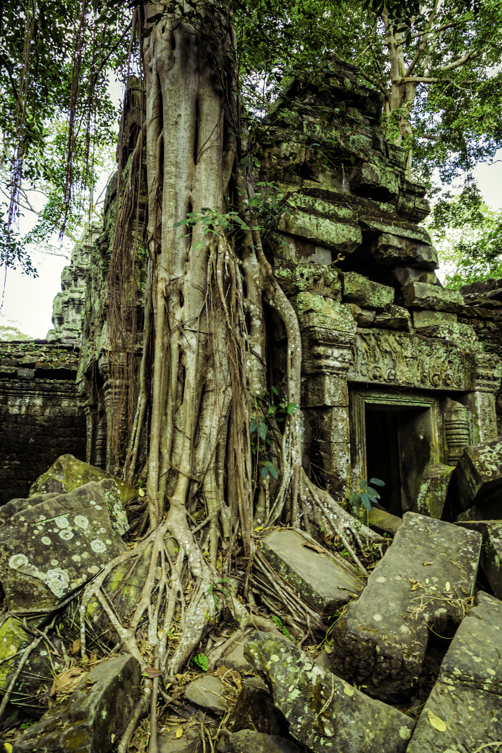 Inside Angkor, the ancient temple of Ta Prohm has been invaded by giant trees.