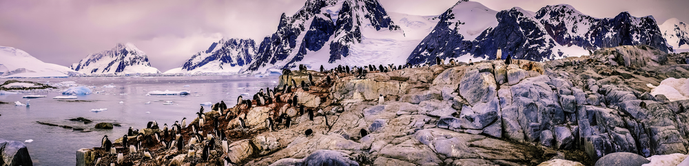 The Nesting Penguins Of Petermann Island