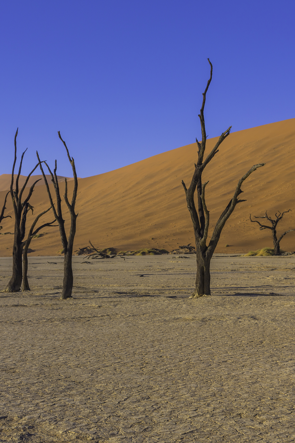 The Otherwordly Deadvlei