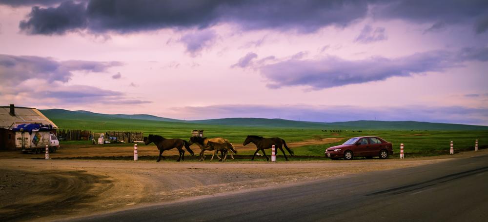 Motorized Horse Herder