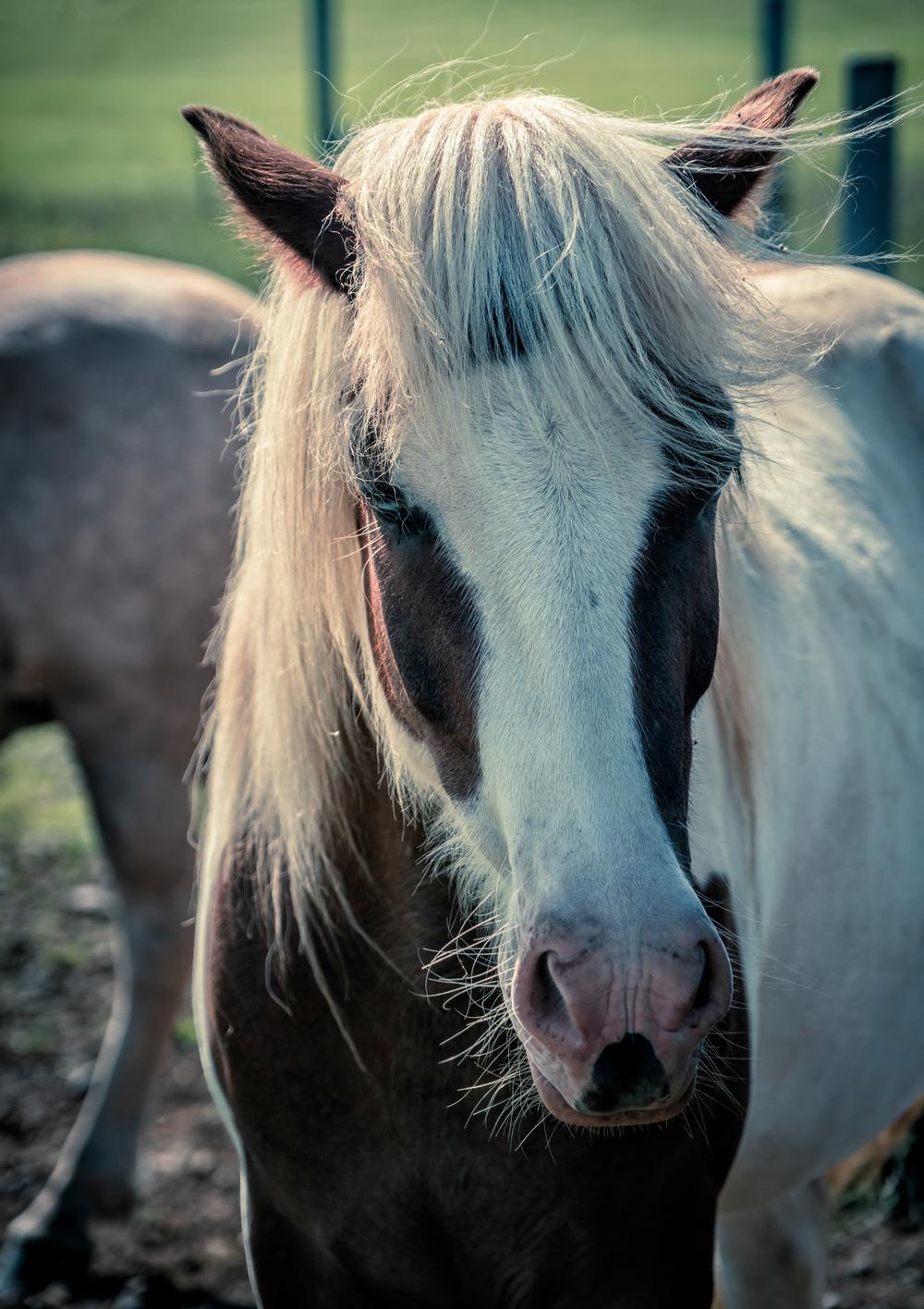 Rockstar Horse