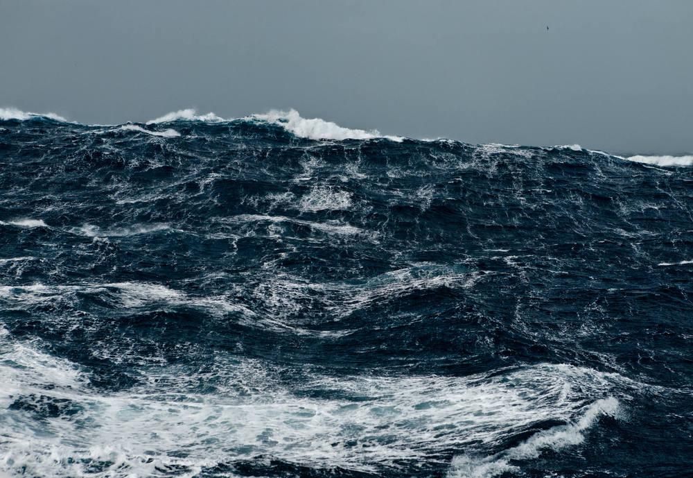 Corey-Arnold-Wolf-Tide-2large.2x.jpg
