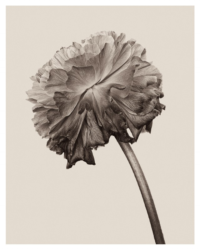 wrinkles-1-640x797.jpg