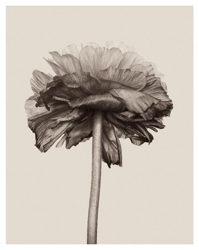 wrinkles-3-640x803.jpg