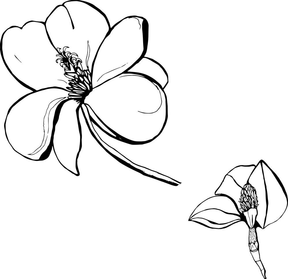 Magnolia Thumbnail.jpg