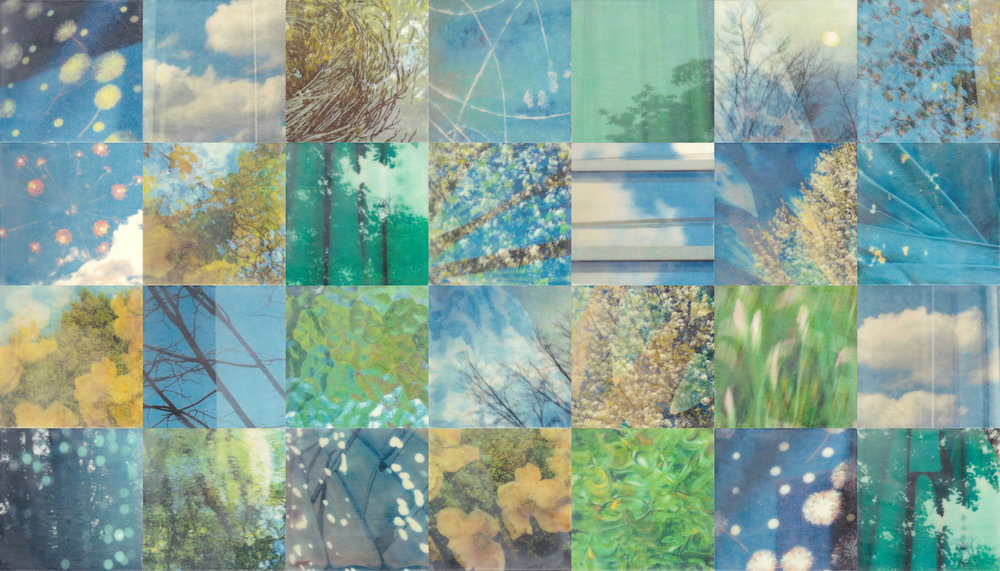 Renewal by Erin Keane : photography with encaustic beeswax : 32 x 56 inches, framed