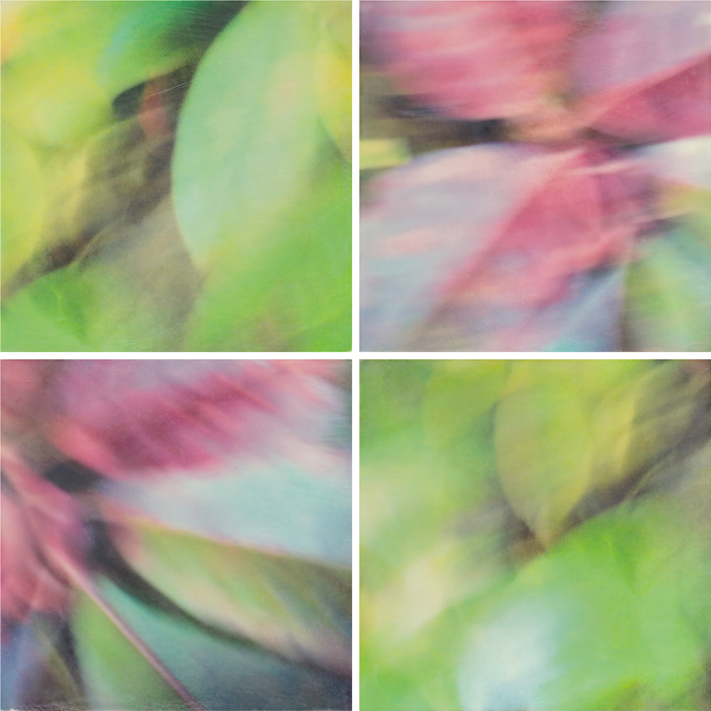 Secrets of Leaves by Erin Keane : photography with encaustic beeswax : 24 x 24 inches