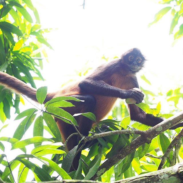 That #guiltylook though. #mango #monkey #osaclandestina
