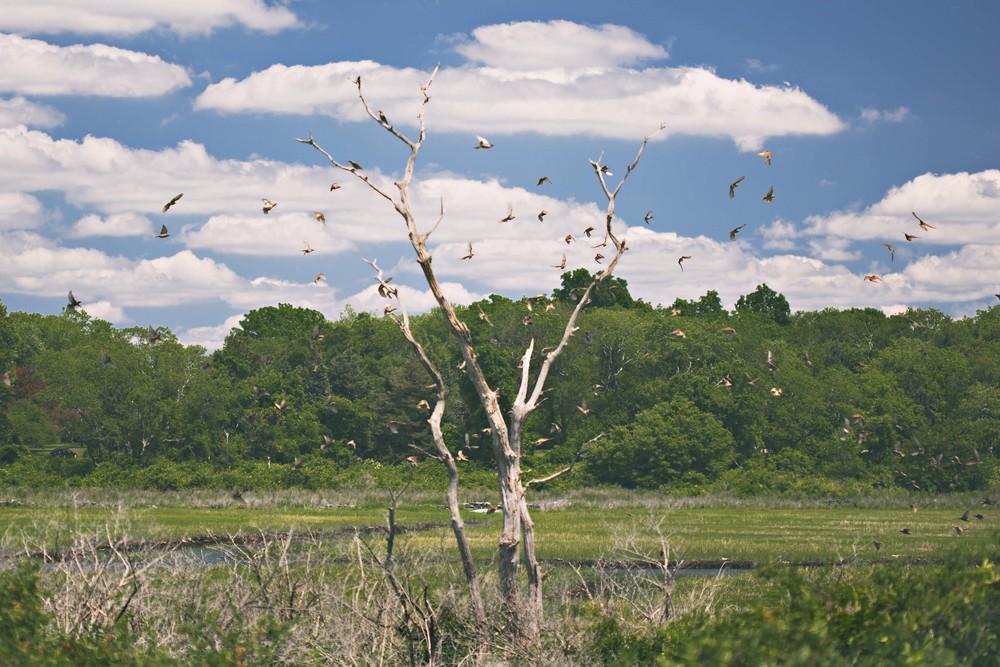 20150623-colt state birds.jpg