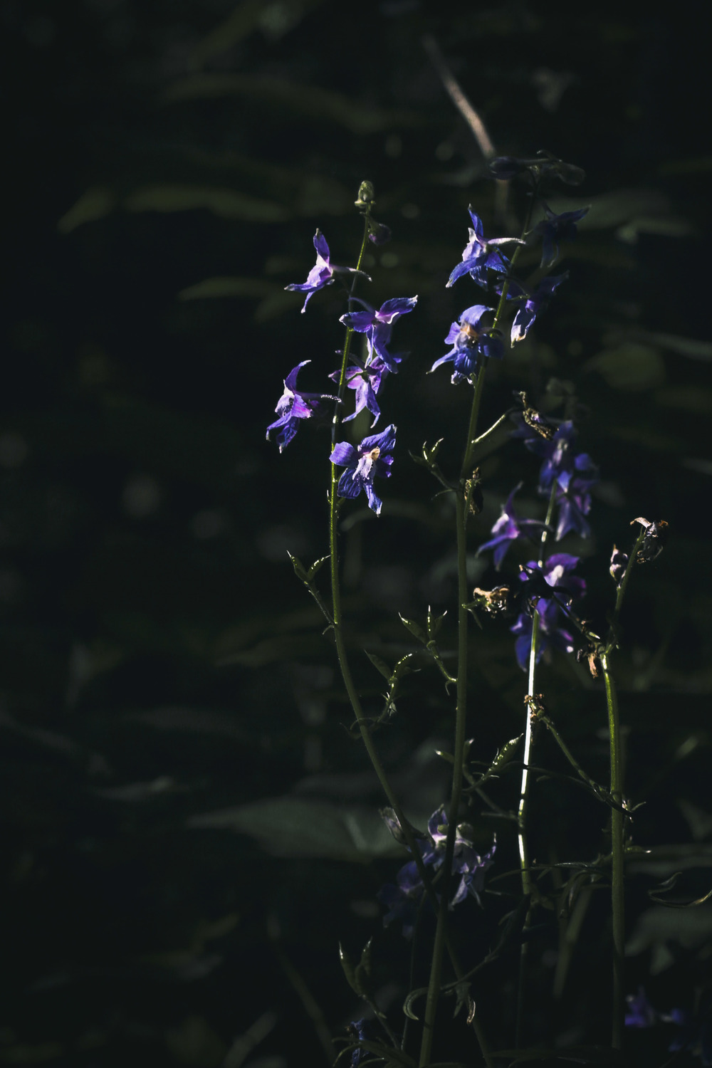 20150527-purple flower_.jpg