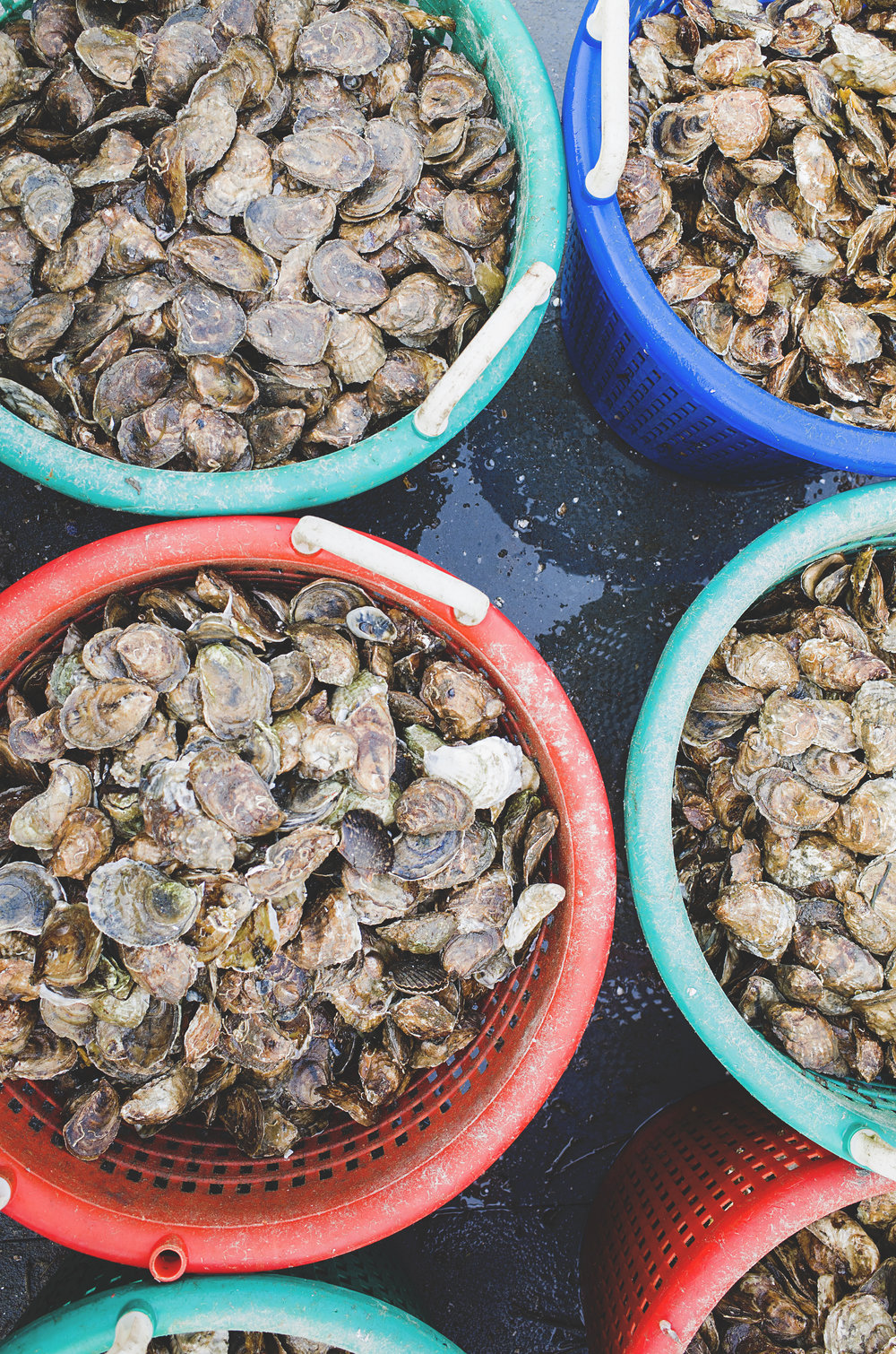 Riptide Oyster Farm 6
