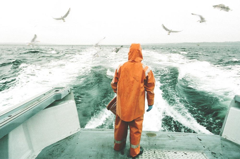 seagulls_and_nick.jpg