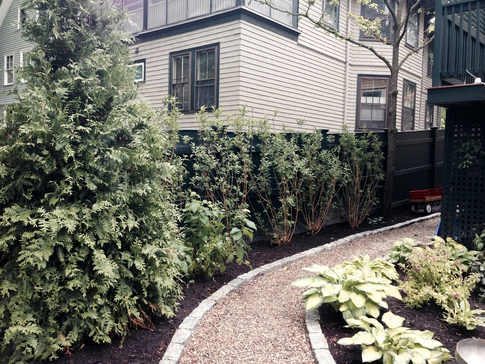 Arbor Vitae and Forsythia line the fence and add privacy from the neighbors.