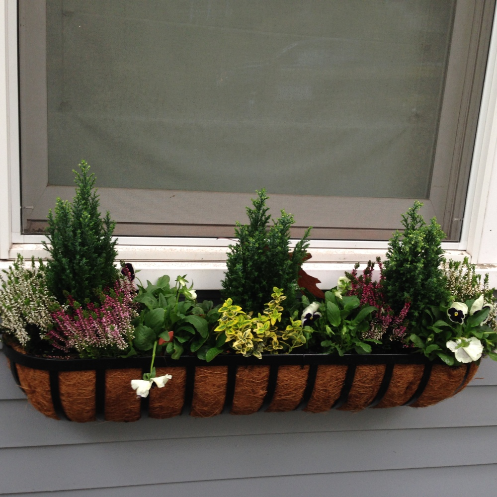 We had assistance from the client's four year old daughter in making these beautiful window boxes.