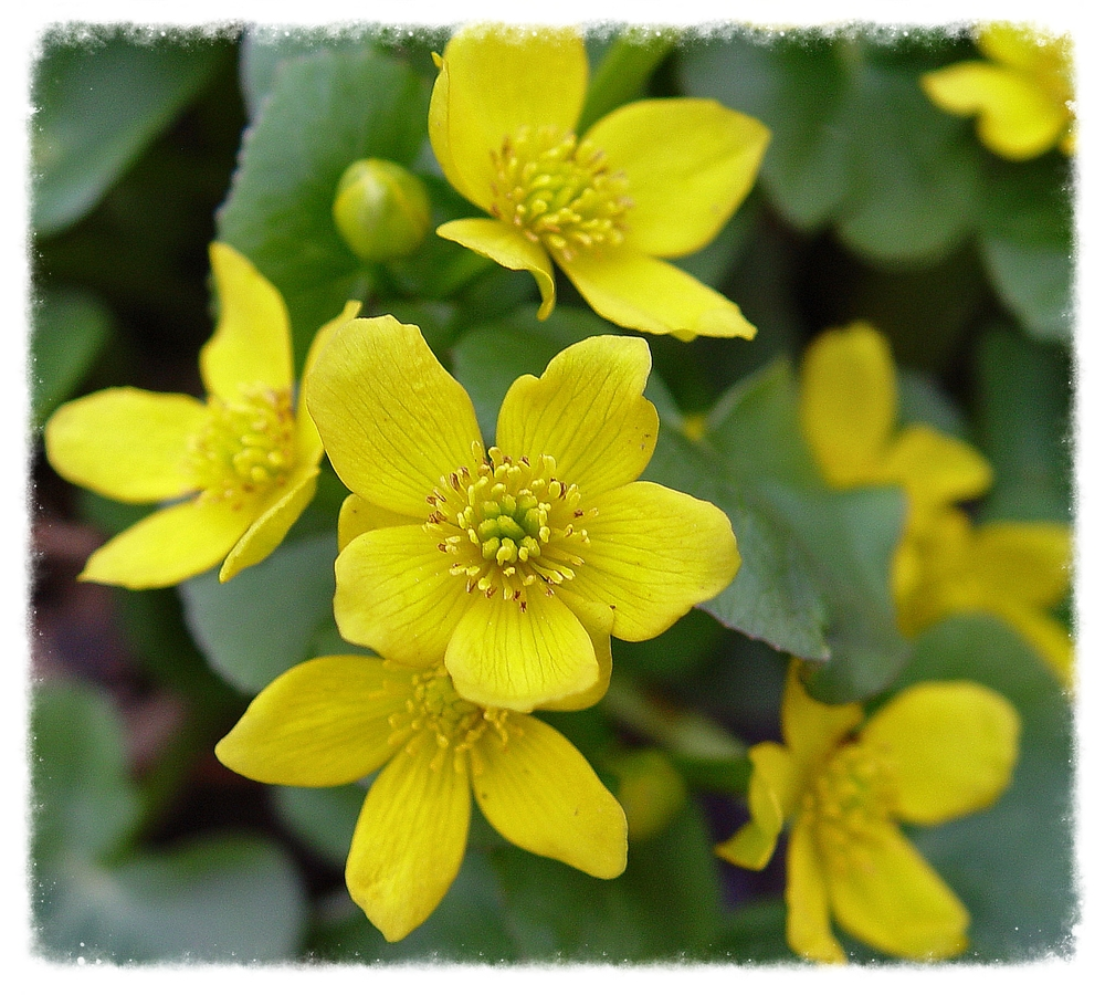 Landscaping With Native Plants : Landscaping with native plants the plant society of