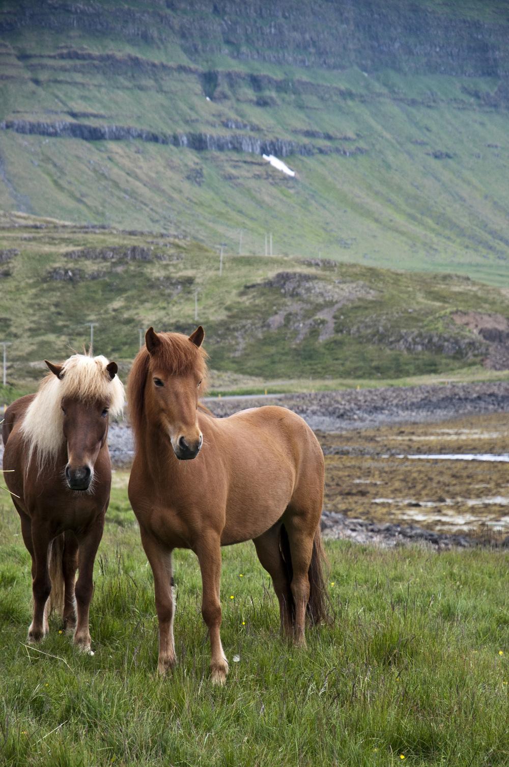 JUNE'12_Iceland_Finals_Horse-02.jpg