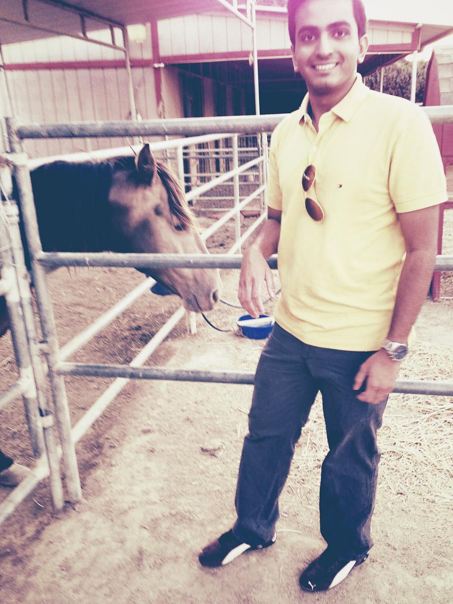 Horse 1