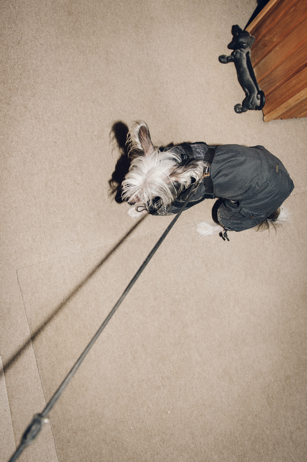 dogs@klausdyba-15.jpg
