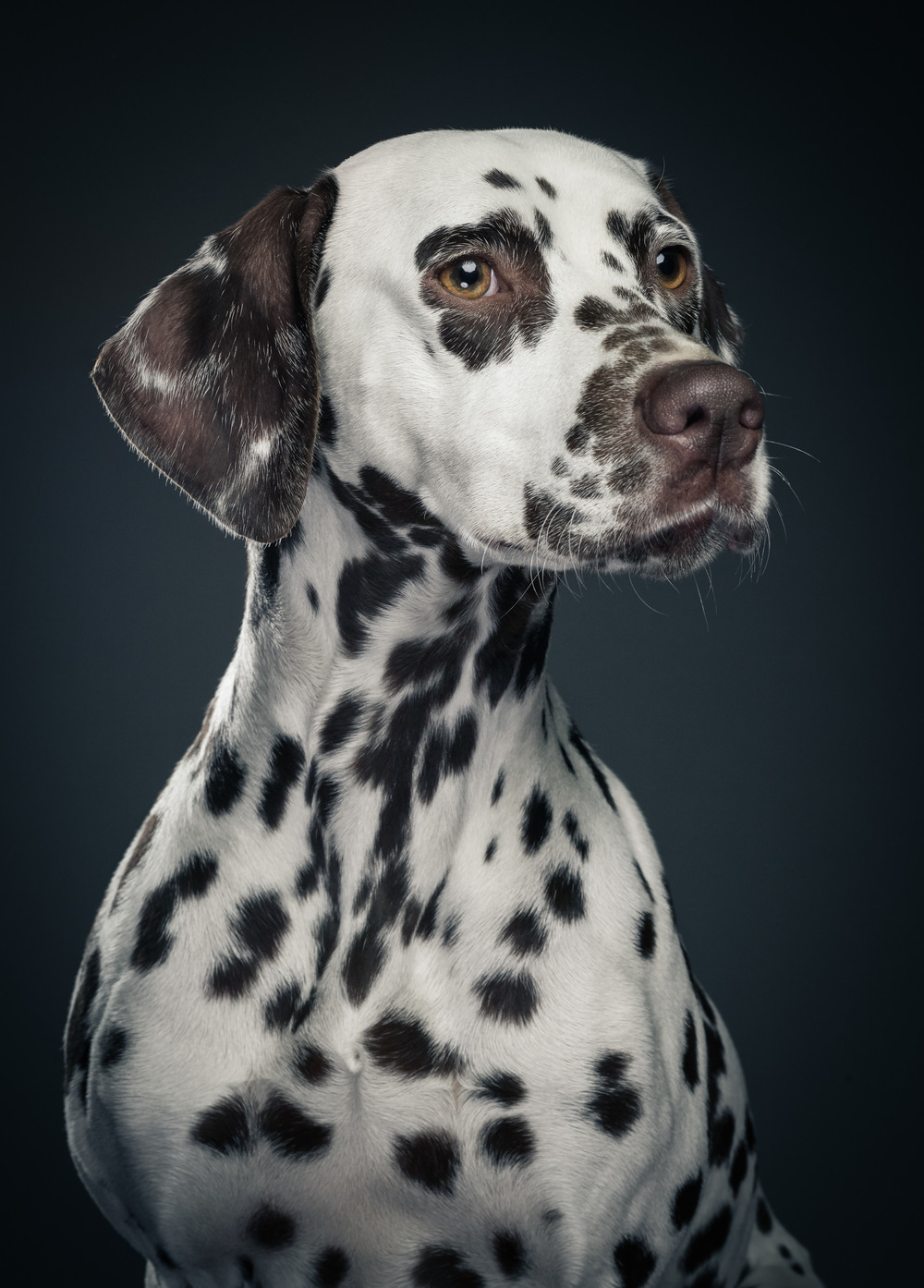 studio-dogs-klausdyba-8.jpg