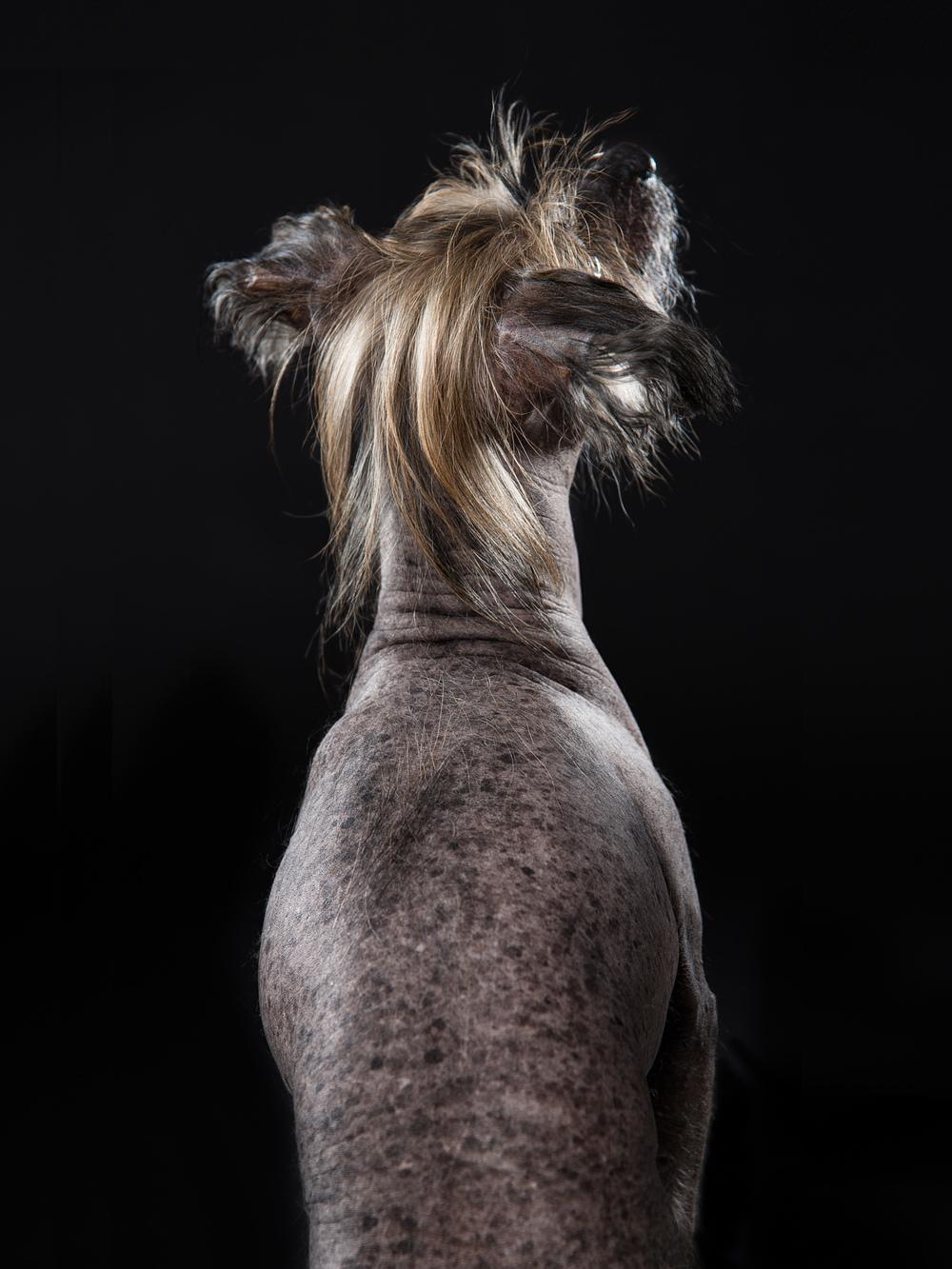 naked-dogs-klausdyba-1.jpg